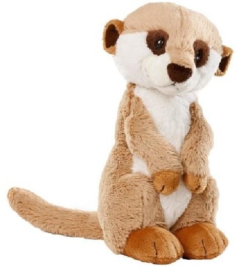 Nici Erdmännchen, meerkat